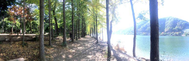 Riverside lover's Gingko Tree Line